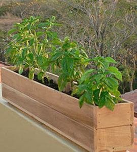 "6"" Teak Window Planter Box"
